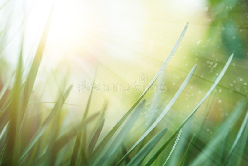 Prado do verão com grama verde Fundo verde luxúria com luz do sol da manhã imagem de stock