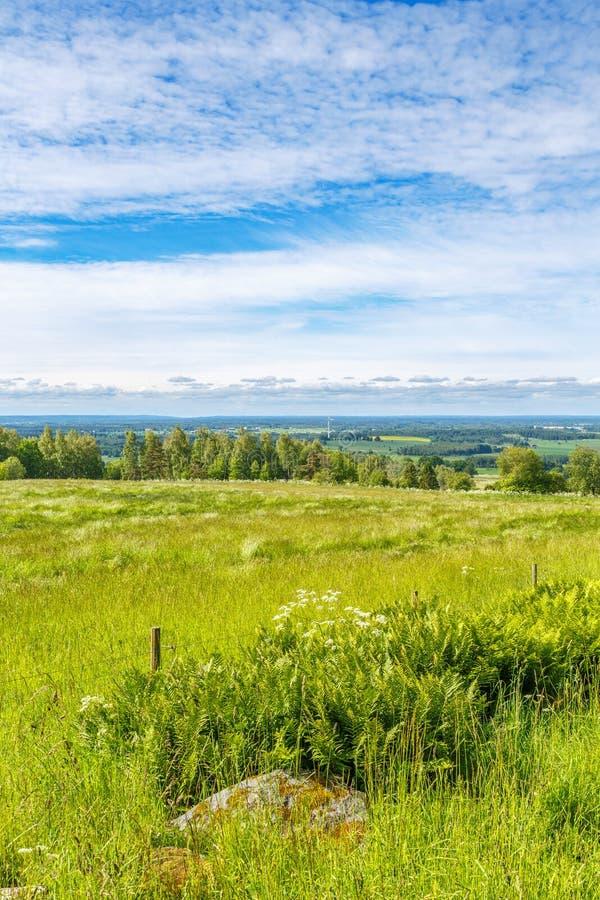 Prado do verão com uma vista bonita imagens de stock