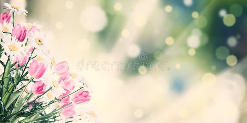 Prado do vintage com flores da mola foto de stock