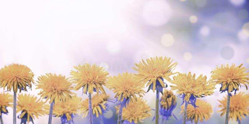 Prado do vintage com flores da mola foto de stock royalty free