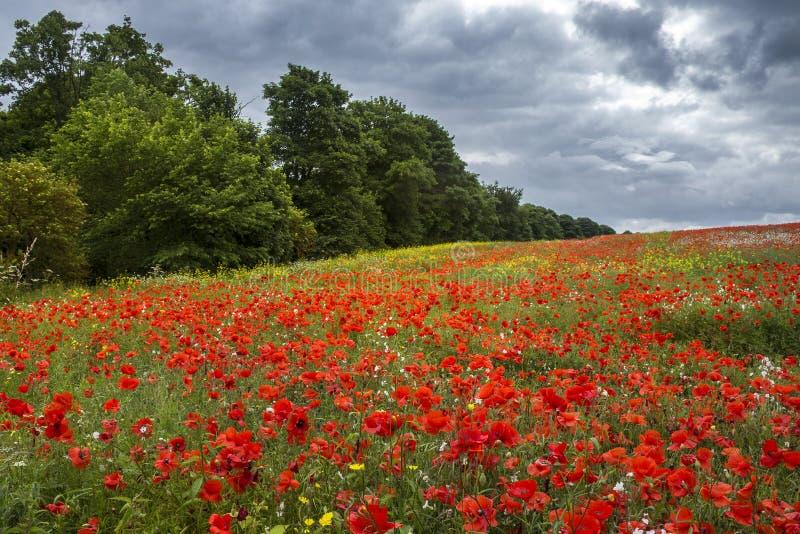 Prado dos Wildflowers - Yorkshire - Inglaterra imagens de stock