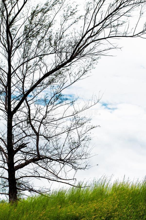 Prado e árvore imagem de stock royalty free