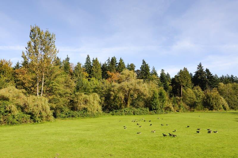 Prado e folhagem de outono bonitos no parque fotos de stock royalty free