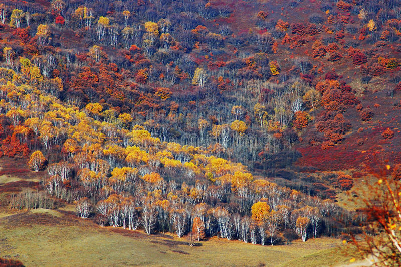 prado en el otoño foto de archivo libre de regalías
