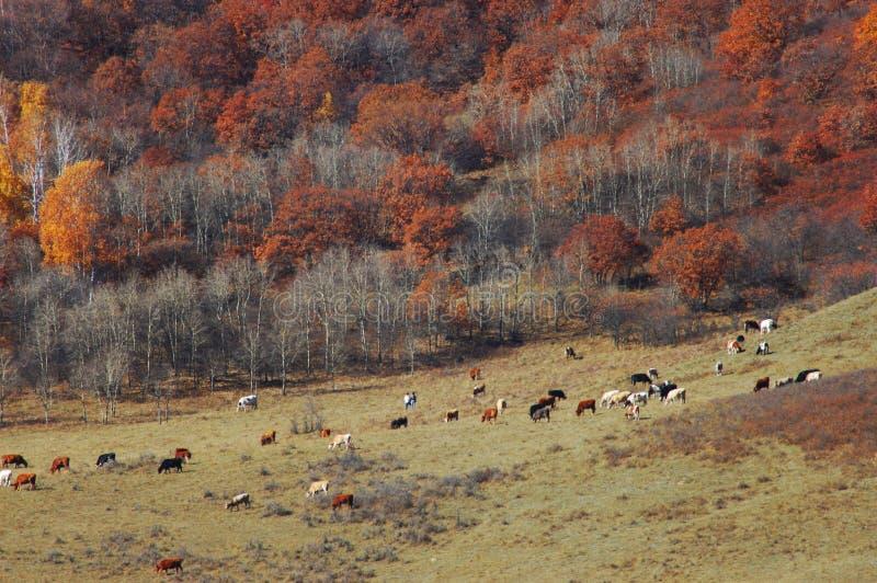 Prado en el otoño imagenes de archivo