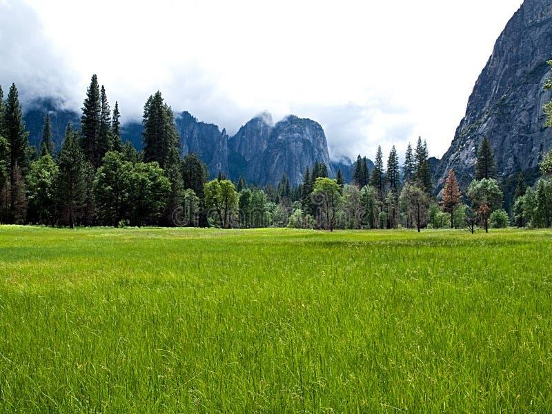 Prado en el valle de Yosemite foto de archivo libre de regalías