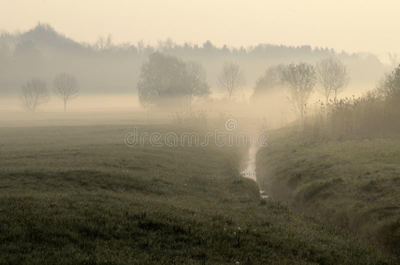 Prado en niebla de la mañana fotografía de archivo