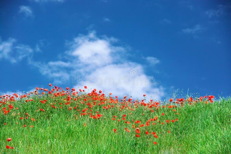 Prado floreciente contra el cielo fotografía de archivo libre de regalías