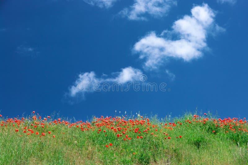 Prado floreciente contra el cielo fotos de archivo libres de regalías
