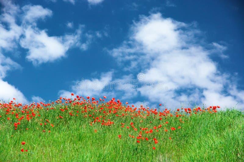 Prado floreciente contra el cielo foto de archivo libre de regalías