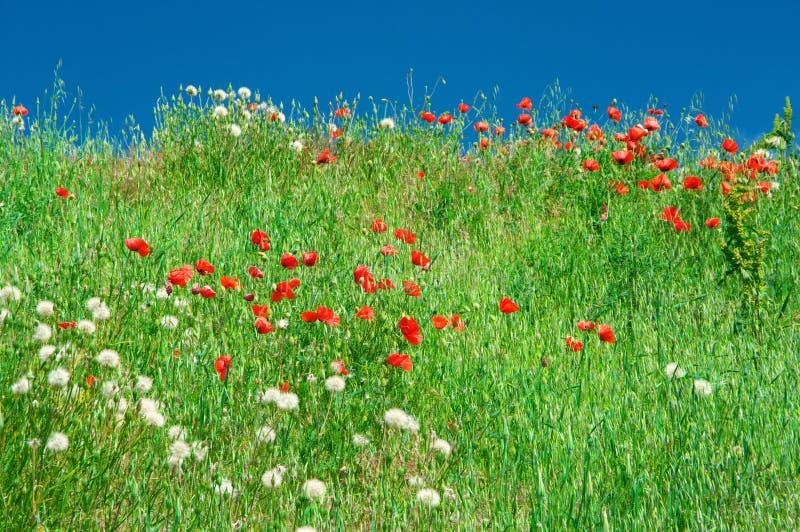 Prado floreciente contra el cielo fotos de archivo