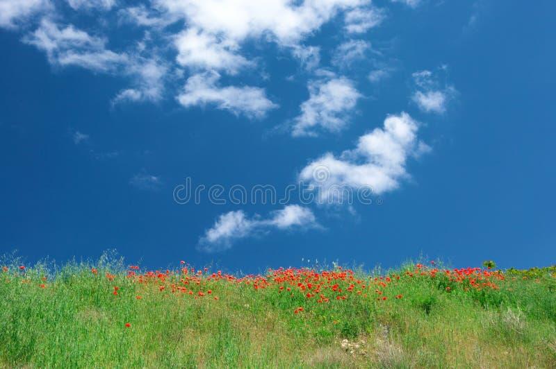 Prado floreciente contra el cielo fotografía de archivo