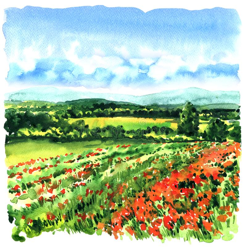 Prado hermoso con la hierba verde, amapolas rojas, flores salvajes Toscana, Italia Campo de las amapolas Ilustración de la acuare imagen de archivo libre de regalías