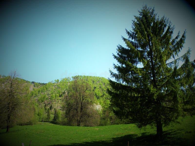 Prado, montes e árvores verdes na natureza intacto imagem de stock