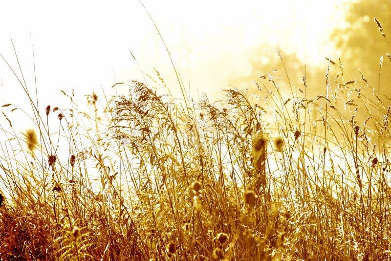 Prado no nascer do sol fotografia de stock royalty free