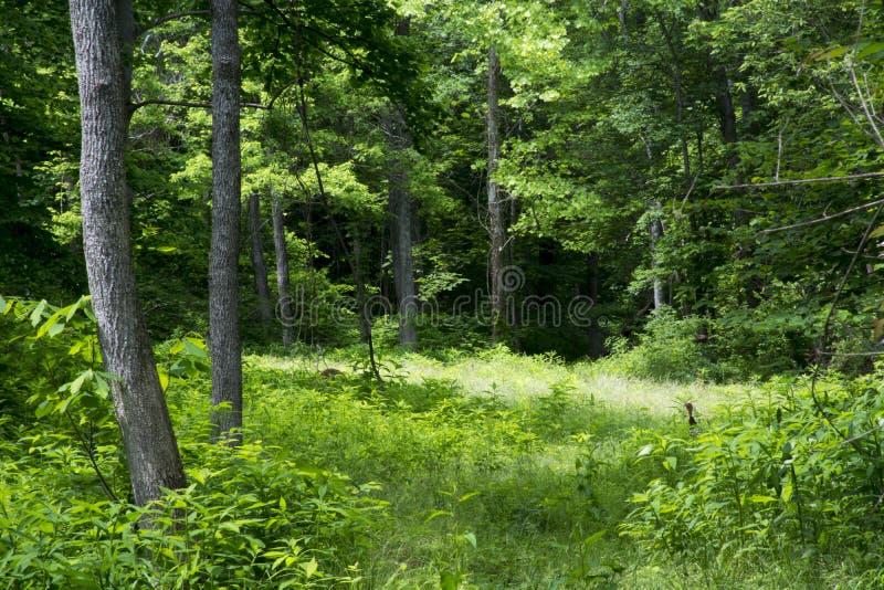 Prado overgrown en un bosque fotos de archivo