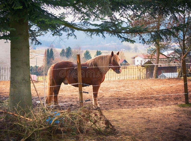 Prado pequeno na vila com um cavalo fotografia de stock