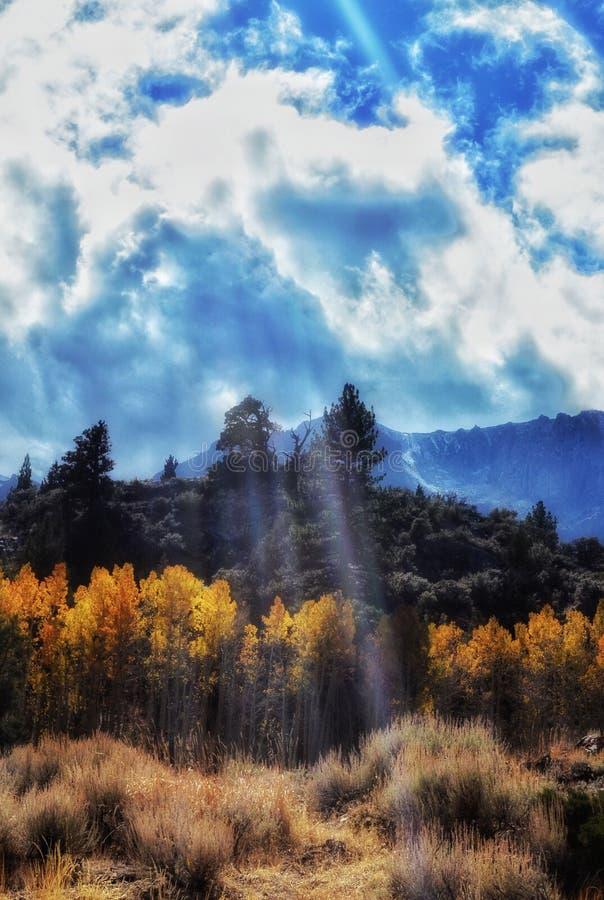 Prado perto do lago gull nas serras orientais de Califórnia fotografia de stock royalty free