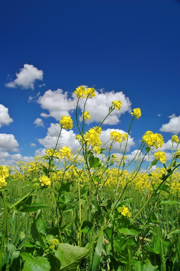 Download Prado rural del resorte foto de archivo. Imagen de verde - 1284978