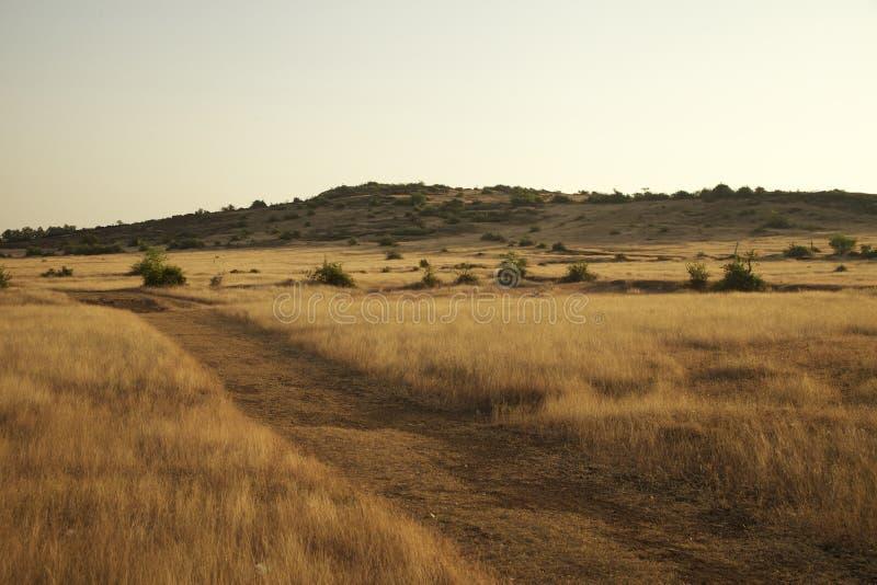 Prado seco com um monte distante e os arbustos imagem de stock royalty free