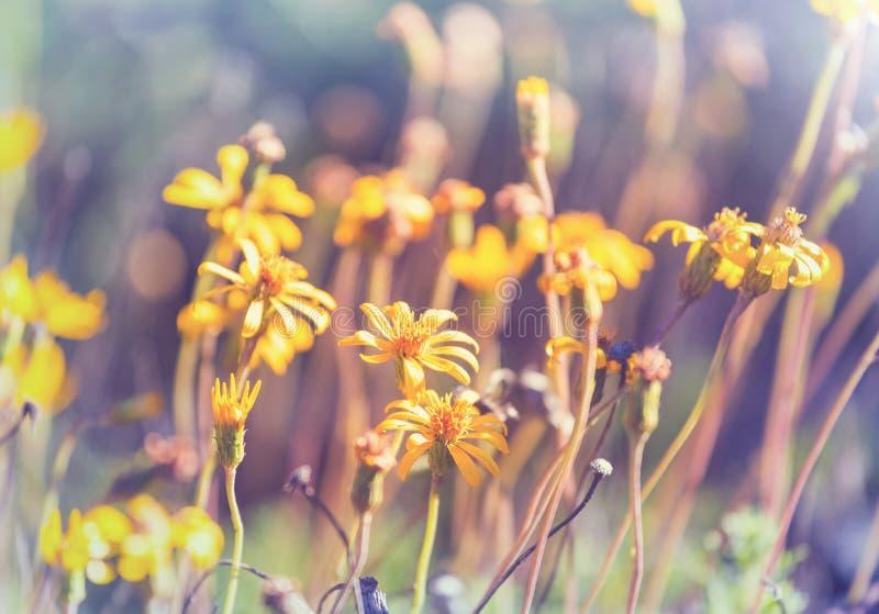 Prado soleado imagen de archivo libre de regalías