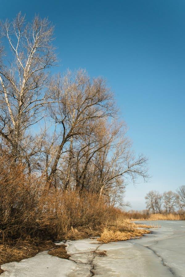Prado soleado en primavera temprana Árboles congelados del lago y de álamo foto de archivo