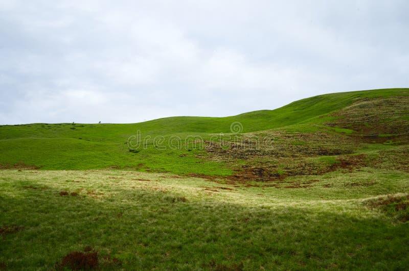 Prado vac?o de la naturaleza del extracto del papel pintado verde del fondo contra el cielo nublado fotos de archivo libres de regalías