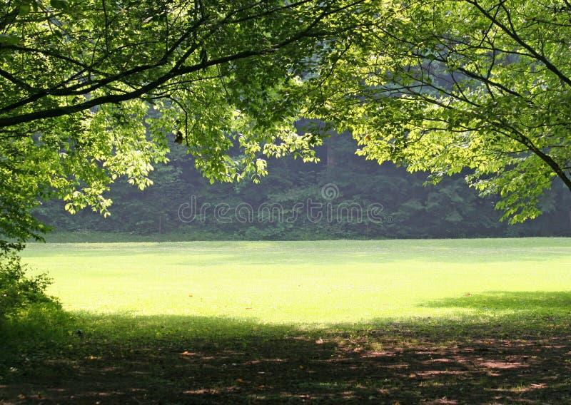 Prado verde foto de archivo libre de regalías