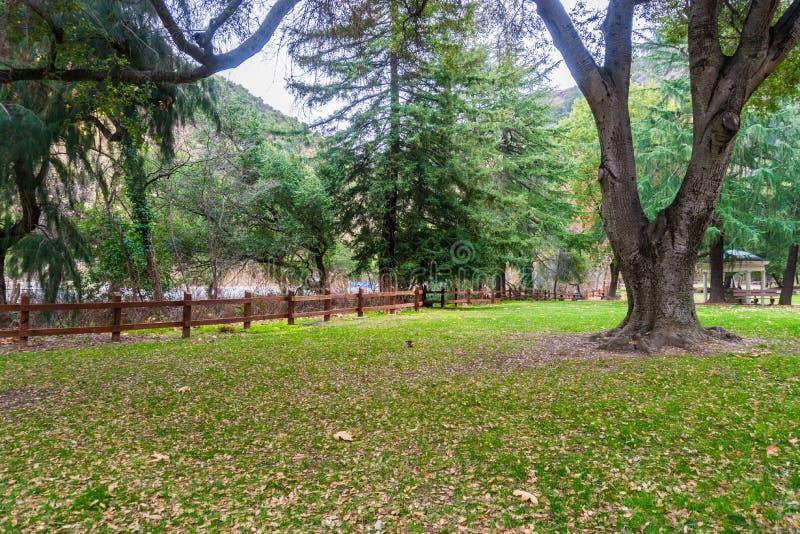 Prado verde coberto nas folhas caídas foto de stock royalty free
