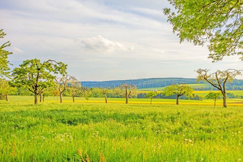 Prado verde con los árboles frutales - paisaje rural foto de archivo libre de regalías