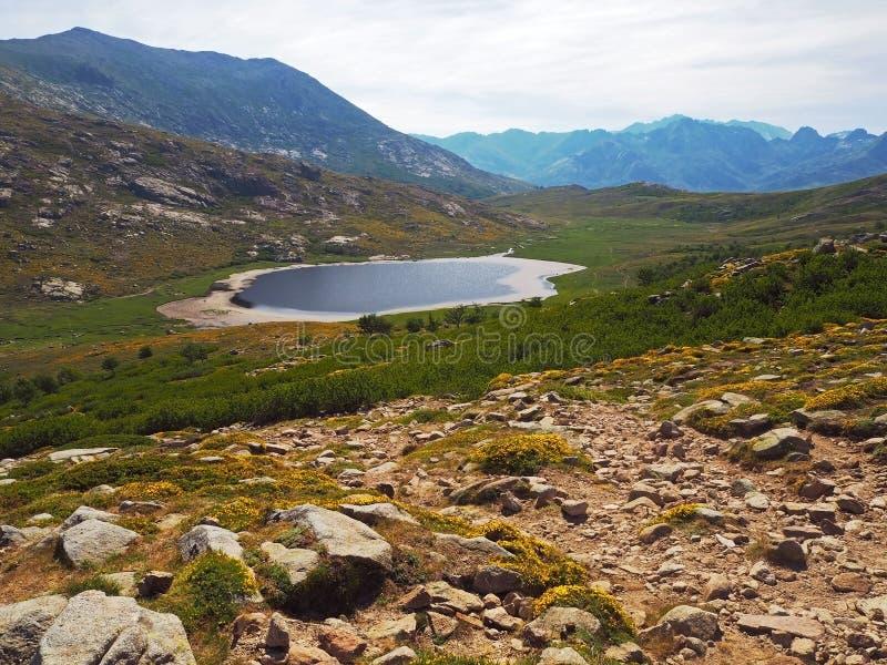 Prado verde de la montaña con las flores amarillas y el la azul hermoso imagen de archivo libre de regalías