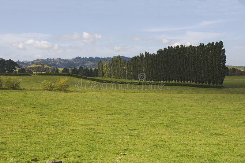 Prado verde de Nueva Zelandia foto de archivo libre de regalías