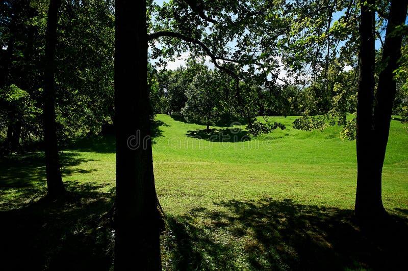 Prado verde debajo de la sombra de árboles, color soleado rico fotos de archivo libres de regalías