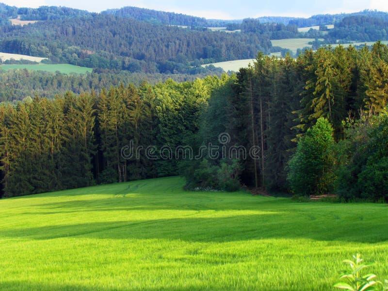 Prado verde na paisagem montanhosa rural, país com o prado verde no verão, floresta, república checa imagem de stock