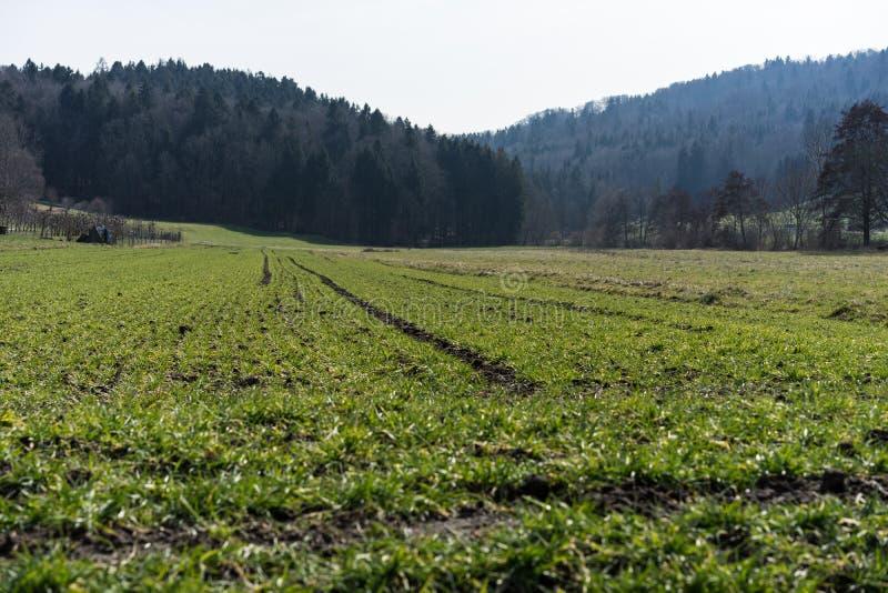 Prado verde para cultivar a paisagem com floresta fotografia de stock