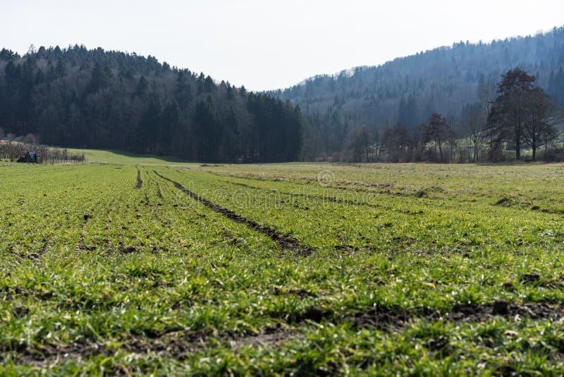 Prado verde para cultivar a paisagem com floresta fotos de stock