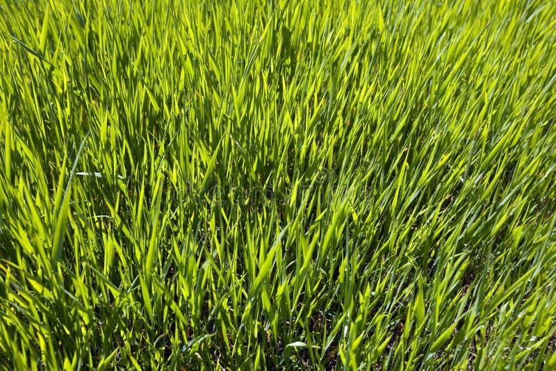 Prado verde Sunlit fotos de archivo