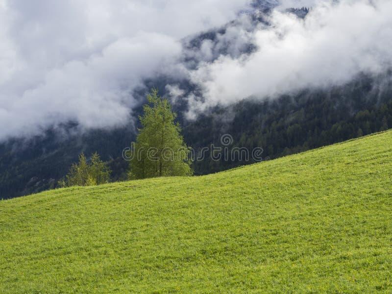 Prado y árboles verdes enormes, paisaje idílico de la primavera de la montaña brumosa del bosque nubes y niebla blancas fotos de archivo