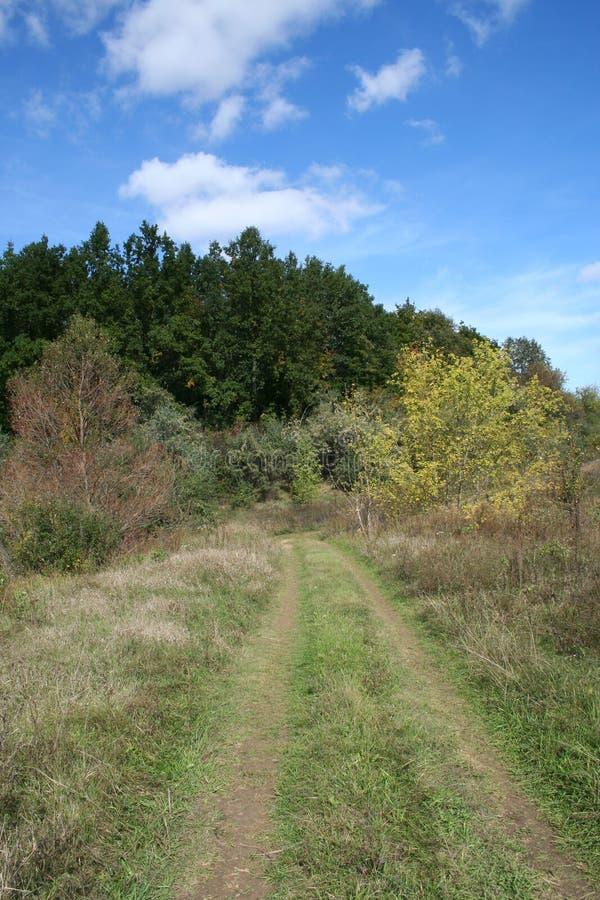 Prado y bosque otoñales Temprano otoño, día soleado, camino en otoño prado seco y bosque de otoño deciduous, tiro vertical imagen de archivo