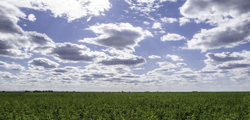 Prado y cielo foto de archivo