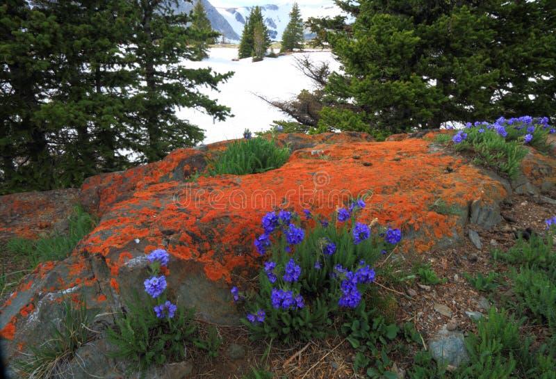 Prados alpinos em Wyoming fotografia de stock royalty free