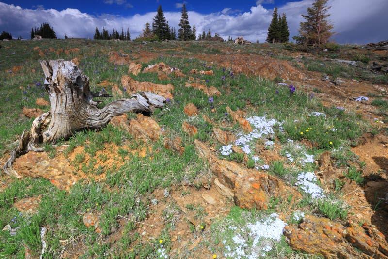 Prados alpinos em Wyoming foto de stock