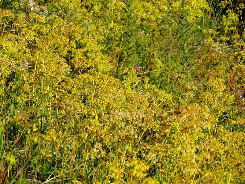 Prados alpinos enchidos fotografia de stock royalty free