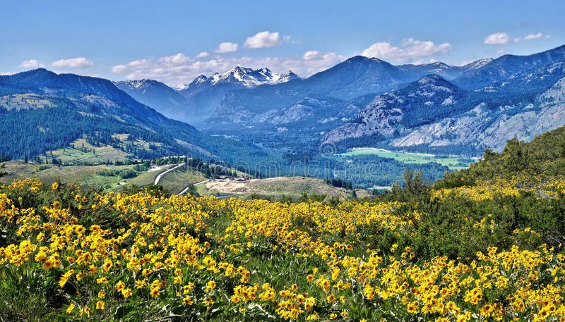 Prados com flores da arnica, estrada de enrolamento e montanhas fotos de stock royalty free