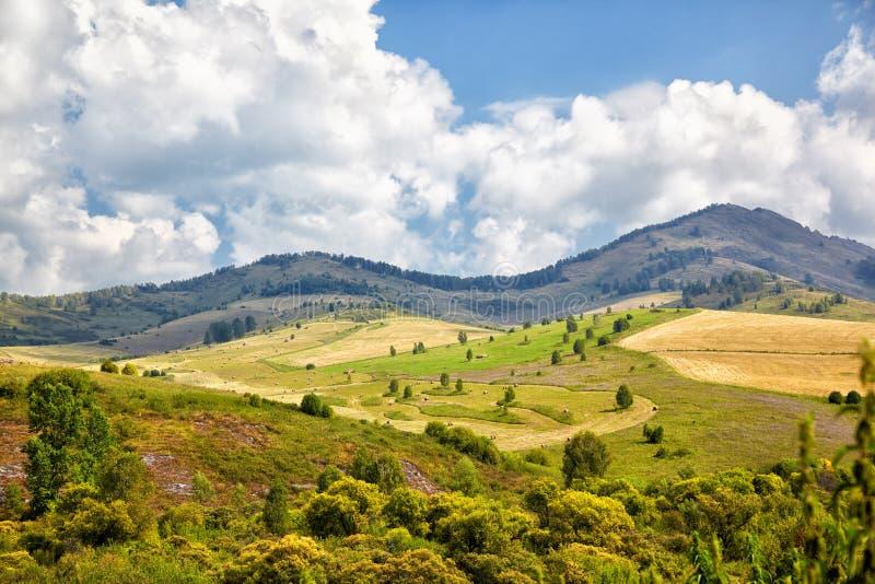 Prados de Altai imagens de stock royalty free