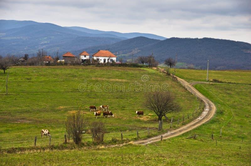 Prados e montes na montanha de Miroc no outono atrasado imagens de stock