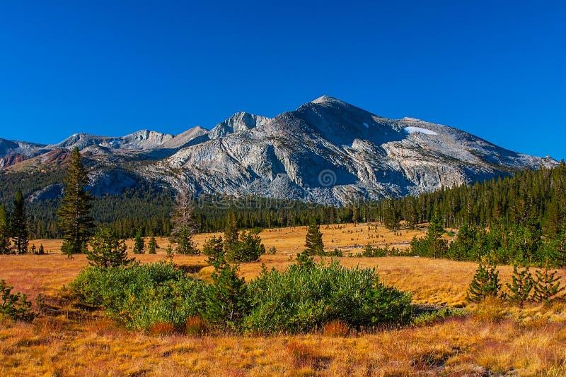 Prados en verano, parque nacional de Tuolumne de Yosemite. fotos de archivo libres de regalías
