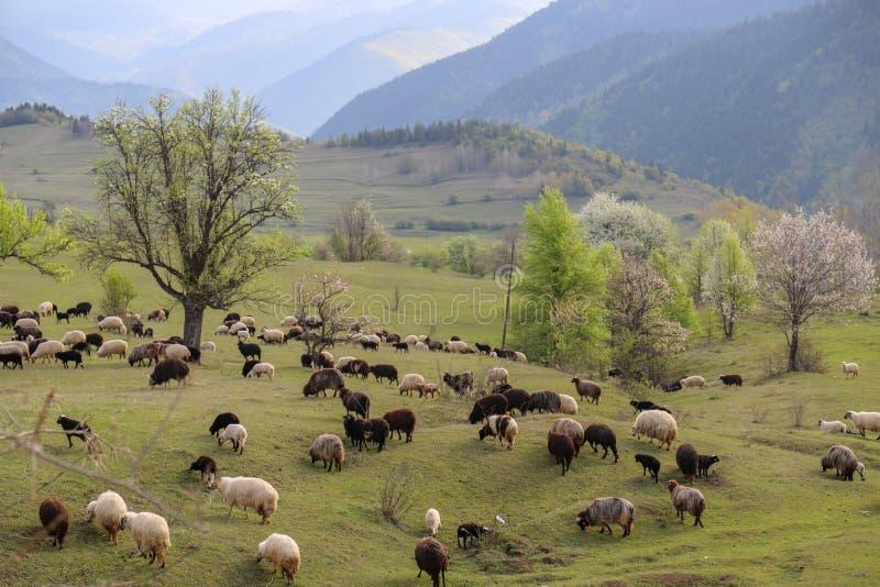 Prados verdes, caballos, vacas, ovejas fotos de archivo