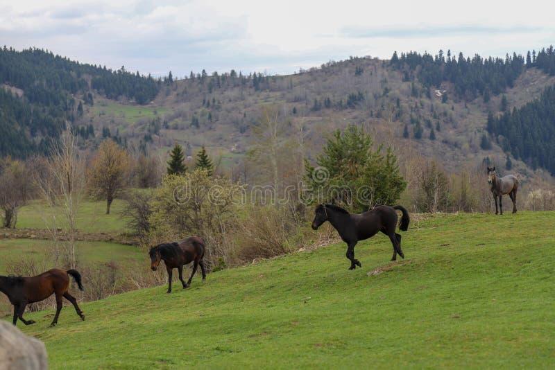 Prados verdes, caballos, vacas, ovejas imagen de archivo