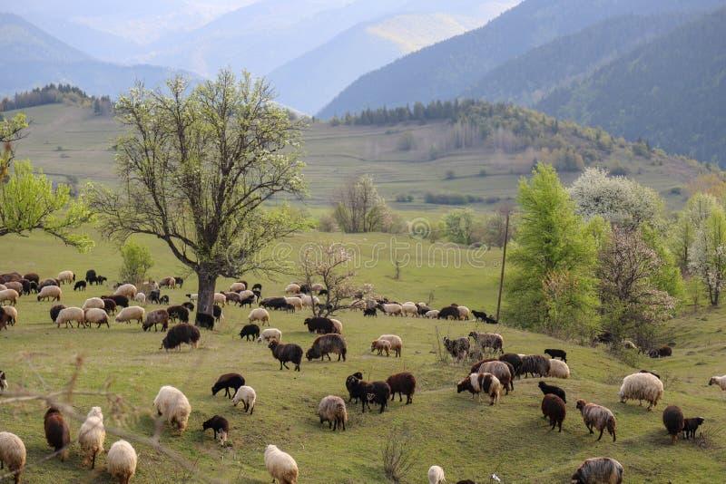 Prados verdes, caballos, vacas, ovejas fotos de archivo libres de regalías